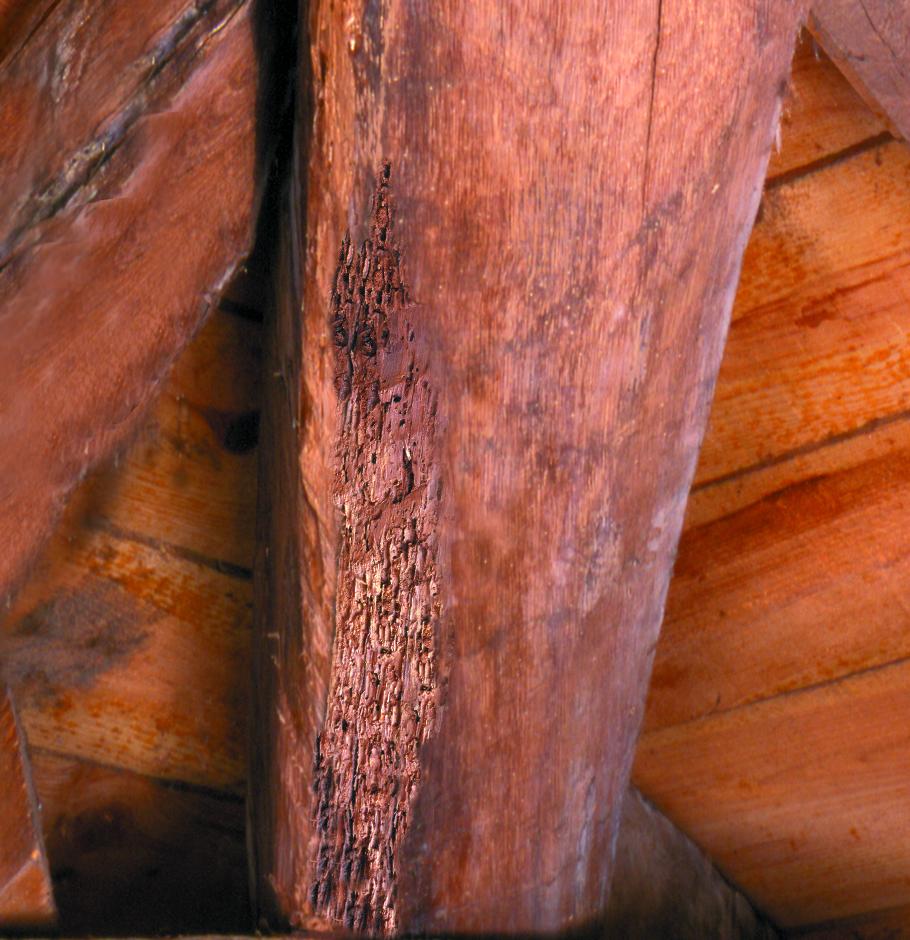 traiter le ver du bois